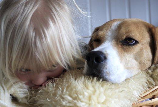 Leben mit hund ein hund als heimtier reduziert ngste bei for Reduziert leben
