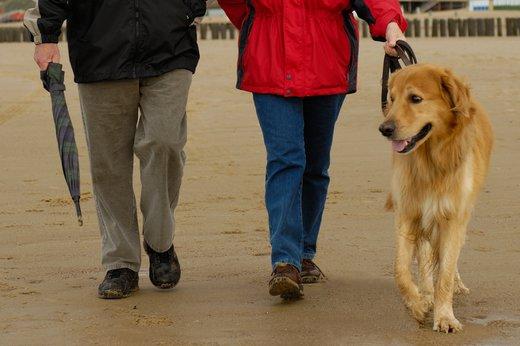 Tierische Partnervermittlung: Tierheim München bringt Hunde und Katzen zu Tinder - healthraport.de