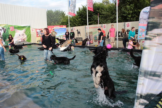 abk hlung hunde beach party in kaiserslautern. Black Bedroom Furniture Sets. Home Design Ideas