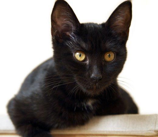 futter und wasser die gewohnheiten der katze. Black Bedroom Furniture Sets. Home Design Ideas