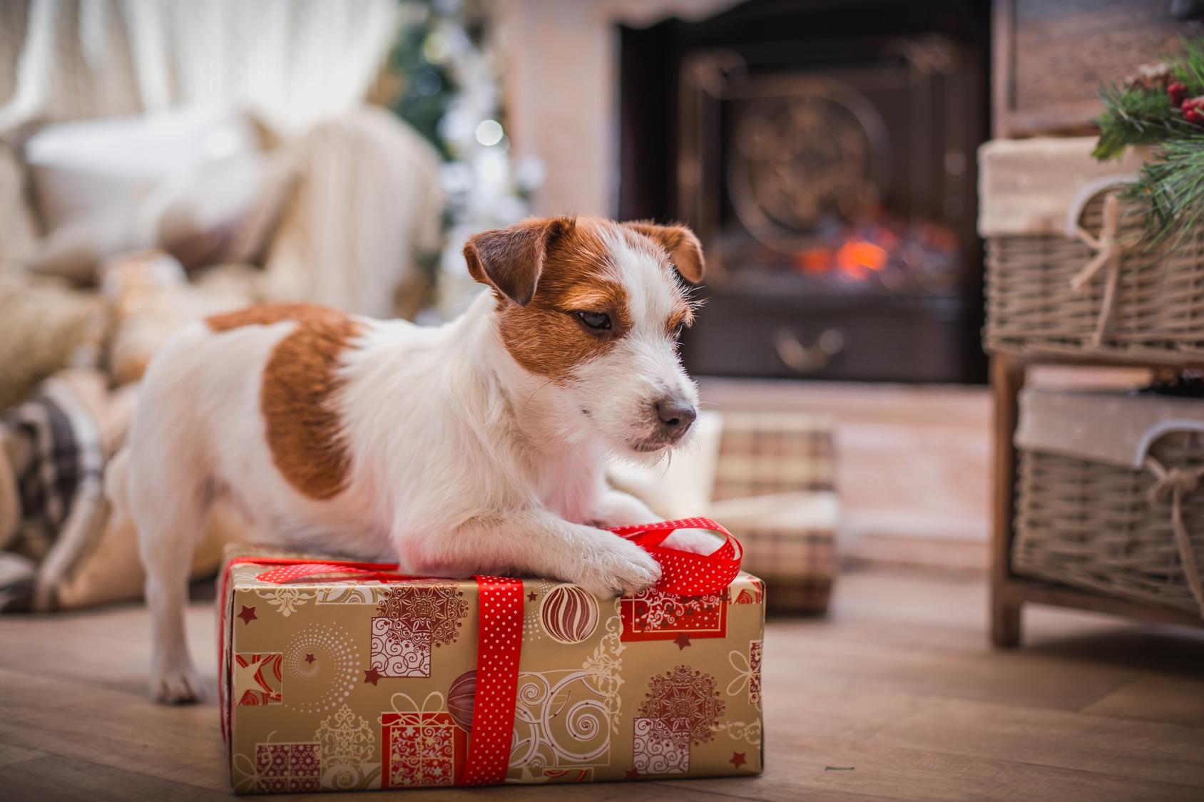 ZooRoyal-Studie__Weihnachtsgeschenke fürs Heimtier sehr gefragt